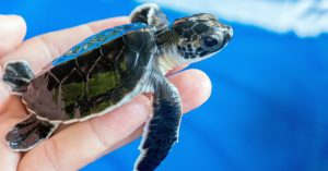 What's Brewing in Science: Sea Turtle Conservation @ Waterline Brewing Co.